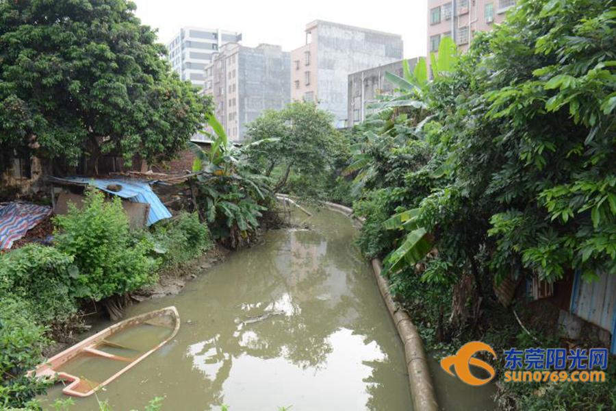 点赞!东莞这条内河涌有望本月消除水体黑臭